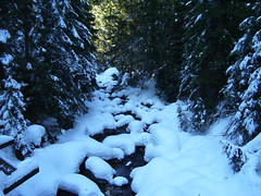 100_2728 (r.tomaszczyk) Tags: trees winter snow poland polska zima tatry zakopane gory snieg