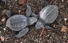 Turtle Crash