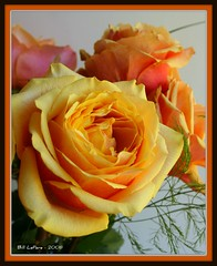 Bouquet of Thanks (bill.lepere) Tags: roses bouquet onlythebestare novaphoto blepere