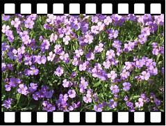 Frhlingsblumen (wo.men) Tags: see wolken haus blumen mai gras spiegelung rahmen frhling lwenzahn spiegeln