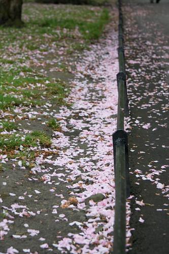 Walkway Petals