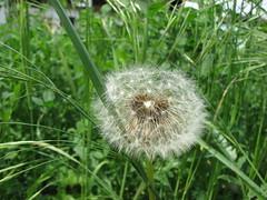 maslaak (zrklek) Tags: priroda klek vojvodina bulka