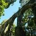 Abraão Aqueduct