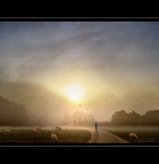 Graceful Morning (h.koppdelaney) Tags: life morning mist art nature beaut