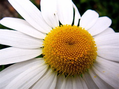 Autumn's Flower (mightyquinninwky) Tags: geotagged award invite superbmasterpiece geo:lat=37963231 geo:lon=87678322 bestofformyspacestation