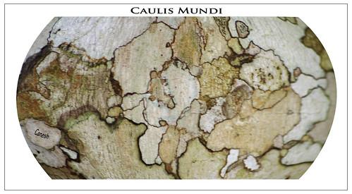 Caulis Mundi