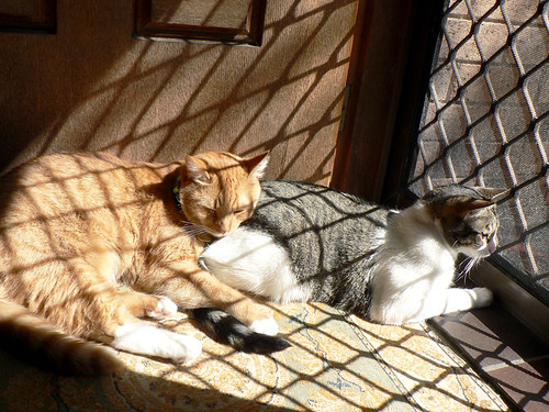 Olly & Ifa