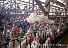 Do NOT support Factory Farming