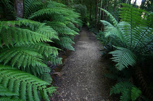 The walk to Montezuma Falls, Western Tasmania.