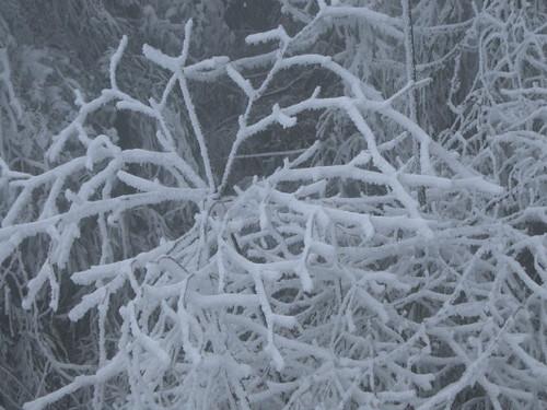 ice_trees_1_1