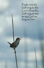 Psalm 104:33 (flyingibis) Tags: bird reed sing marsh wren psalms praise psalm 10433