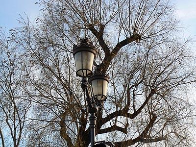 lampadaires et arbres.jpg
