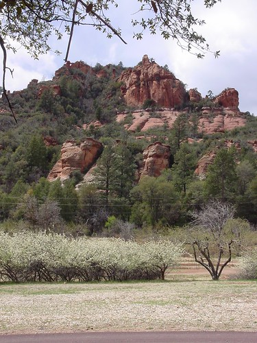 Blossoms at Slide Rock