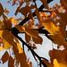 colori d'autunno: un po' di nero...