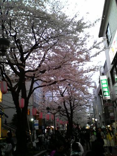 20070331小田原長興寺しだれ桜・ほか五百羅漢