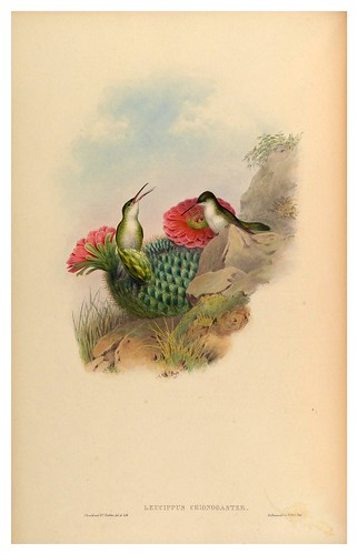 016-An introduction to the Trochilidae or family of humming-birds- Vol 5- 1861-John Gould