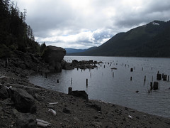 A Flooded Forest (Shutterbug Fotos) Tags: vacation pacificnorthwest olympics washingtonstate lakecushman