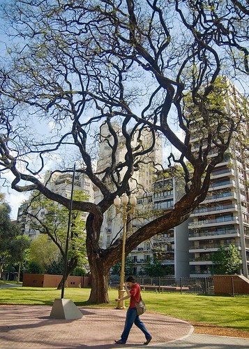 Trees of Buenos Aires: Plaza Vicente López
