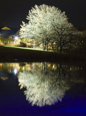 Big white (diesmali) Tags: light shadow white reflection tree water night pond sweden sverige lit linkping bigwhite stergtland canoneos40d johanklovsj
