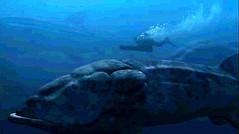 12 Leedsichthys migration