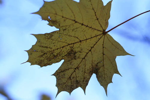 leaf sequence1
