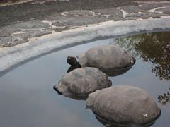 Chilling tortoises