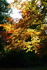 Tree in Sunlight (torimages) Tags: england unitedkingdom somerset allrightsreserved donotusewithoutwrittenconsent copyrighttorimages