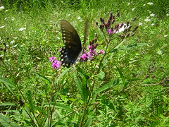 DSCN1210 (alle_alleb) Tags: flowers summer dogs butterflies indiana fields trips
