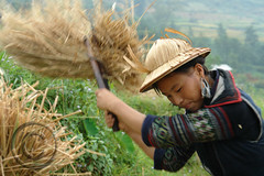 Black Hmong, Sapa, Vietnam (NaPix -- (Time out)) Tags: black face asia farming harvest teens na vietnam sapa hmong laochai nam minorities riceharvest hmoob ricefarming minoritytribes hmongwoman hmongteens napix nampix