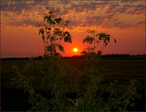 Warm Prairie Sunrise in Late July