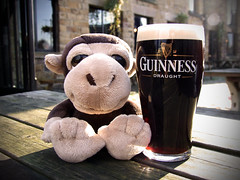 Egg enjoys a Guinness (Eskimimi) Tags: beer monkey pub egg guinness