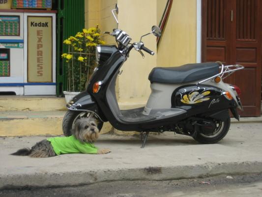 dog_motorbike_1