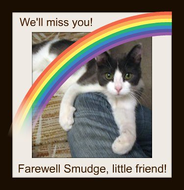 Farewell Smudge, little friend!