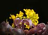 Bouquet on a Bouquet (believer9) Tags: flowers macro water contest flickrsbest abigfave anawesomeshot infinestyle diamondclassphotographer excellentphotographersaward theunforgettablepictures brillianteyejewel platinumheartaward theperfectphotographer bestofflickrsbest waterdropmacros waterdropsmacros