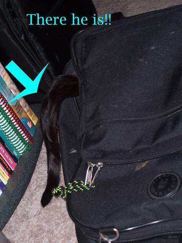 Frisco hiding