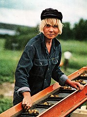 blonde worker (white_fundude) Tags: vintage fun stuff 1960s 1970s whitepeople younggirls hotwomen vintagefun vintagewhitepeople whitepeoplehavingfun whatwhitepeopledotoamusethemselves