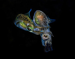 Mating dumpling squid (Cal Mero) Tags: people art water fashion photography photographer underwater famous fine under cal dresses conceptual caelum mero wwwunderwaterfashionorg