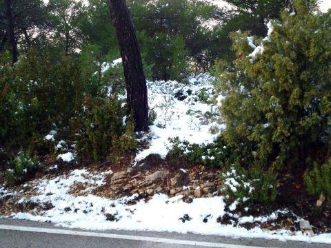 Primera nevada - La Llacuna