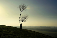 Lonely tree on Pegsdon Hills (Jayembee69) Tags: tree hill hilltop dusk evening view pegsdon chiltern chilterns chilternhills beds bedfordshire sunset winter february bare stark lonely windswept