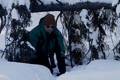 #76 GGO Chase Part 5 Birding on McDavitt Road in Saint Louis County Minnesota Photo by Ron Howard (wesbird72) Tags: minnesota winter cold colder coldest boondocks snow snowy ice icy hairy woodpecker pine grosbeak