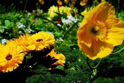 color - flower