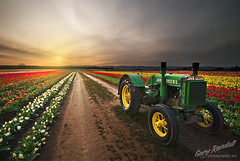First Thing in The Morning (Gary Randall) Tags: flowers tractor field sunrise tulips farm tulip woodenshoe johndeere garyrandall dsc73972