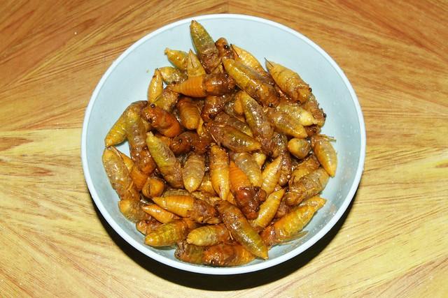 Edible cicadas