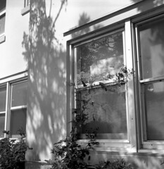 Window Dressing (Ikoflex) (macromary) Tags: blackandwhite bw abandoned 120 tlr film overgrown analog zeiss vintage mediumformat blackwhite fuji dof florida bokeh availablelight urbandecay ikoflex naturallight monotone 120film depthoffield urbanexploration vintagecamera fujifilm neopan manual filmcamera zeissikon derelict rundown twinlensreflex urbex oldglass carlzeiss analogphoto tessar vintagelens primelens mechanicalcamera flurbex ikoflex1c ikoflexic