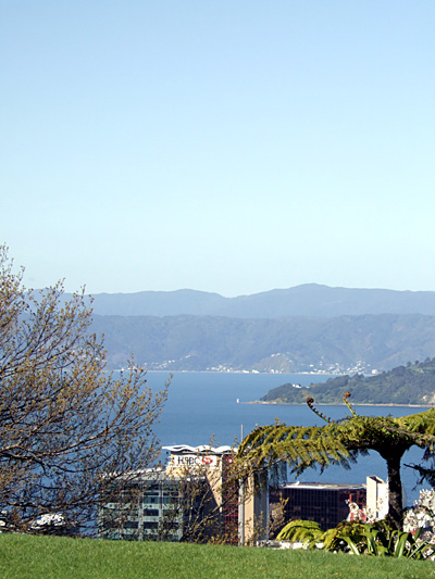 Looking out over Wellington Harbour