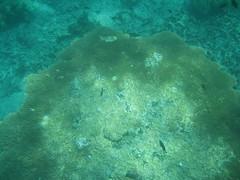 IMG_2565 (dcgreer) Tags: malaysia pulau redang pulauredang