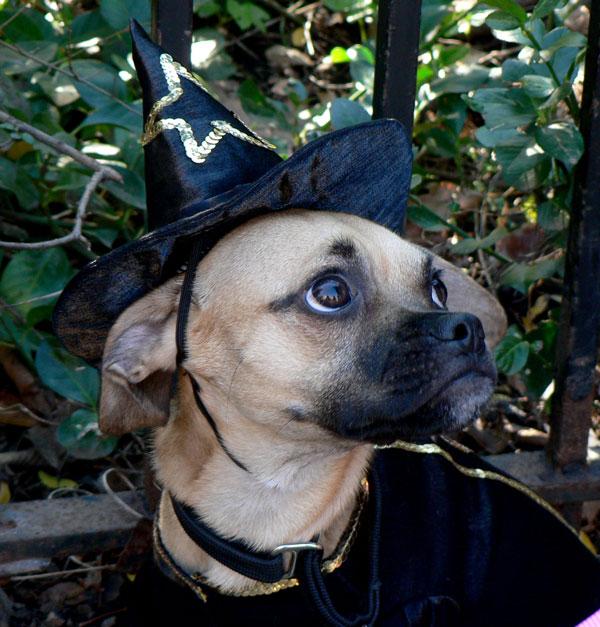 Dogwitch