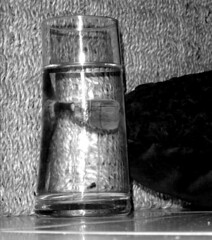 Glass 83/365 (Murfomurf) Tags: sunlight flower water glass garden bush basket velvet rhododendron azalea shrub wicker cushion botanicgardens smocked mtlofty murfomurf oneobject365daysproject