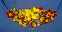 marigolds from garden