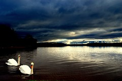 Priceless (Nicolas Valentin) Tags: cloud reflection scotland swan scenery lochlomond ecosse themoulinrouge magicdonkey